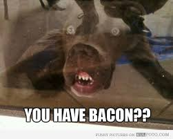 Dog Bacon Meme - 229 best bacon images on pinterest bacon funny bacon bacon and