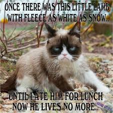 Grumpy Cat Snow Meme - 810 best grumpy cat images on pinterest funny stuff grumpy cat