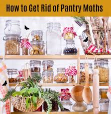 how to get rid of pantry moths in your kitchen naturally