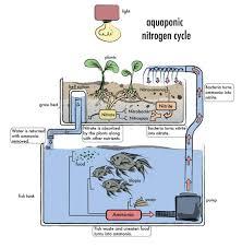 desember 2016 download aquaponics plans