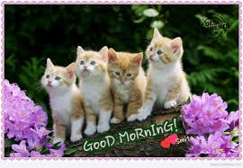 Good Morning Cat Meme - good morning cute cats desicomments com