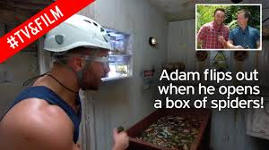 Hit The Floor Adam - i u0027m a celebrity star adam thomas screams shouts and jumps for his
