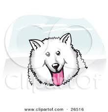 american eskimo dog vector clipart illustration of a fluffy and friendly white american