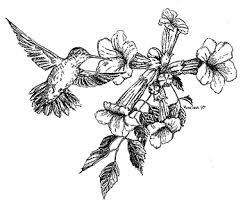 Hummingbird Flowers Hummingbirds U0026 Feeders
