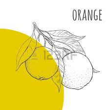 orange vector freehand pencil drawn sketch illustration of