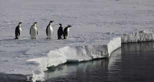 emperor penguins encounters in the antarctic wilderness