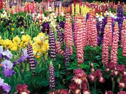 garden flowers 50 best types of flowers u2013 pretty pictures of