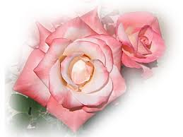 Pink Roses Wallpaper by Roses Wallpapers