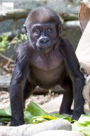 woodland park zoo blog april 2016