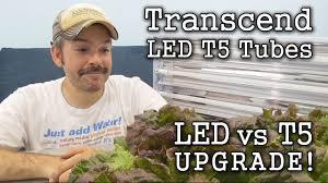 t5 vs led grow lights t5 fluorescent vs thrive agritech transcend led grow lights