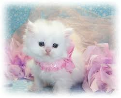 wallpaper cat whatsapp 30 lovely cute cats pictures