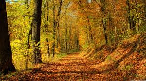 thanksgiving desktop backgrounds free free autumn wallpaper for desktop wallpapersafari