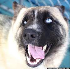 belgian sheepdog california these 26 mixed up mutts prove pedigree can u0027t trump the pure charm
