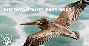 Mississippi Wildlife Tours images Birding tours experience avian life of new orleans the great png