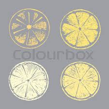lemon citrus fruit color sketch draw isolated over white
