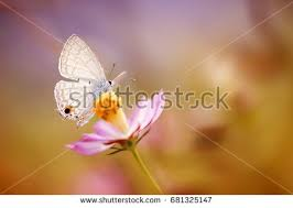 butterfly flower butterfly flower stock images royalty free images vectors