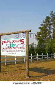 papa johns tree farm south carolina usa stock photo