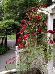 rose trellis cuteness in all its versatility