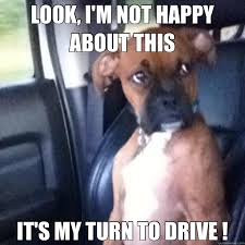 Funny Boxer Dog Memes - dog memes that will keep you grinning 99 whiskers