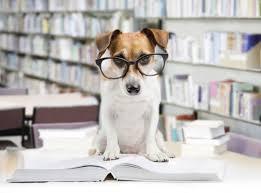 test ingresso veterinaria test veterinaria 2017 cosa studiare per la prova studentville