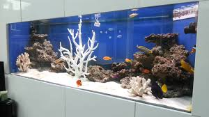 saltwater fish only aquarium with tangs angelfish clown fish and