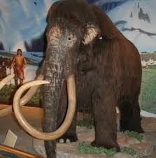 author discusses dynamic resurrection woolly mammoth