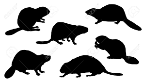 beaver logo stock photos royalty free beaver logo images and pictures