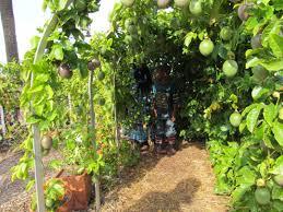 the olivewood garden muslim homeschool blog