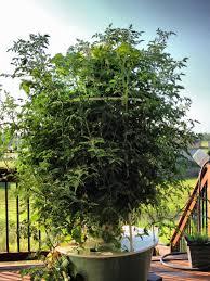 Aeroponic Vertical Garden Urban Aeroponic Vertical Gardening In Kcmo