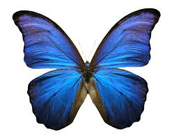 butterfly 3 free images at clker com vector clip art online