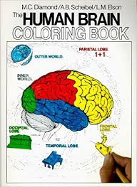 The Human Brain Coloring Book Coloring Concepts Series Brain Coloring Page