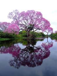 imágenes asombrosas naturaleza mundos mágicos naturaleza asombrosa