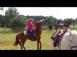 Meme Horse - horse john cena meme hd youtube