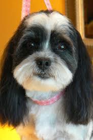 91 best grooming u003c3 images on pinterest dog grooming salons