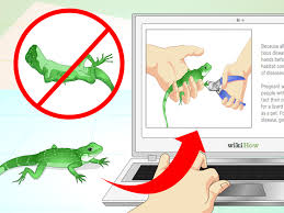 how to take care of a chinese water dragon 14 steps