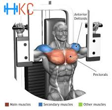 how to perform pectoral machine or butterfly exercise chest exercise