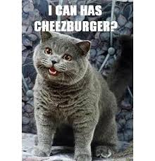 Internet Meme Pictures - the power of internet memes and a lot of fun along the way