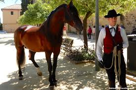Andalusian Horse Show In Córdoba Retired And Travelling