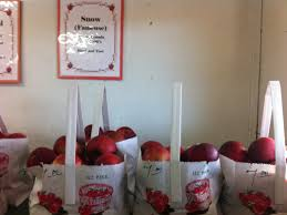 smith farm apples still available for thanksgiving pies avon ct