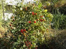 self reliance skill put your garden to bed for the winter