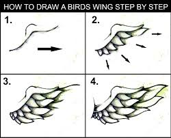 how to draw a wing step by step art guide daryl hobson artwork