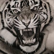 black white tiger design