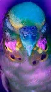 uv light for birds keep it natural bird lighting