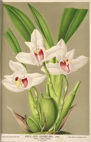 serre horticole en verre best 25 serre horticole ideas on pinterest illustration