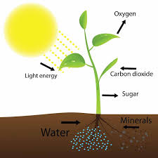 light and plant growth how light affects plant growth what you need to know green and