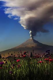 volcano flowers 272 best volcano images on landscapes nature