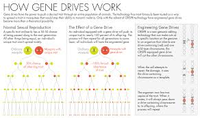How To Map A Drive Gene Drives Will Clash With Evolution Quanta Magazine