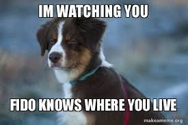 I M Watching You Meme - im watching you fido knows where you live unsure dog make a meme