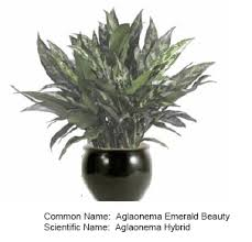 Plants For Office Indoor Plants U2013 For Office And Home U2013 Serving All Of San Diego County