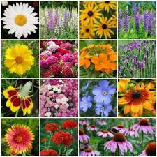 wildflower seed packets wildflower seeds flower seed mix edenbrothers
